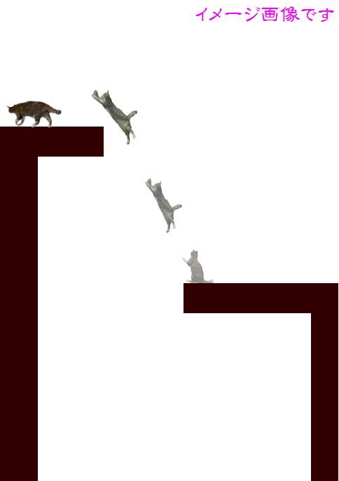 blog猫の身体能力2