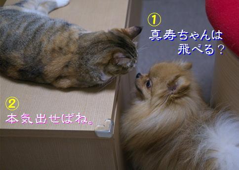 blog猫の身体能力3