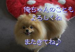 blogまた来てね20150422