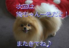 blog20150513また来てね