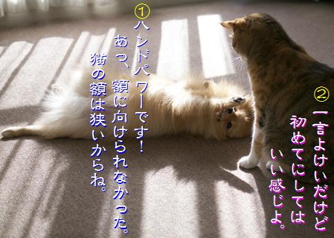 blog-hp1-4.jpg