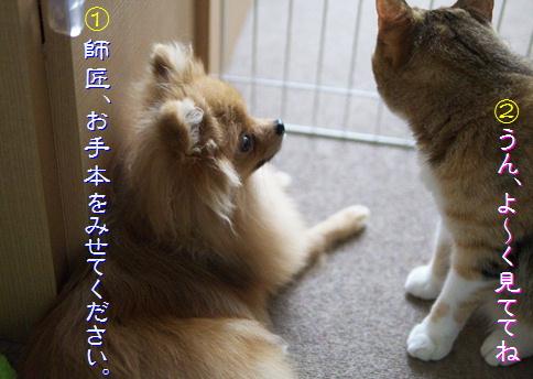 blog-hp1-5.jpg