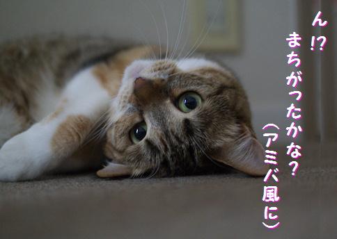 blog-hp2-12.jpg