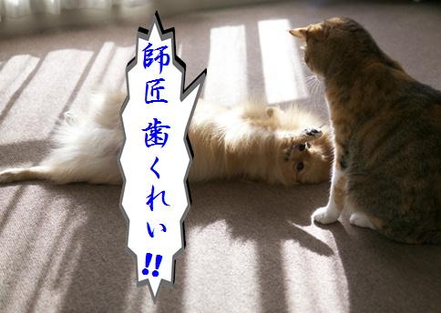 blog-hp2-9.jpg