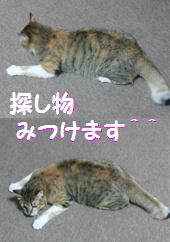 blog20150317.jpg
