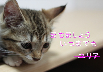 blog20150408-4.jpg