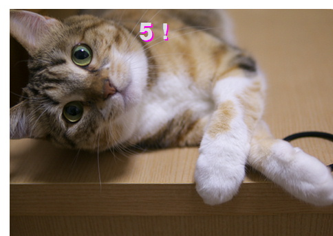 blog20150422-2.jpg