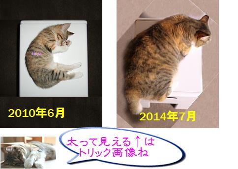 blog20150422-5.jpg
