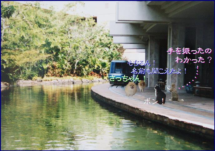 bloghawaii1-8.jpg