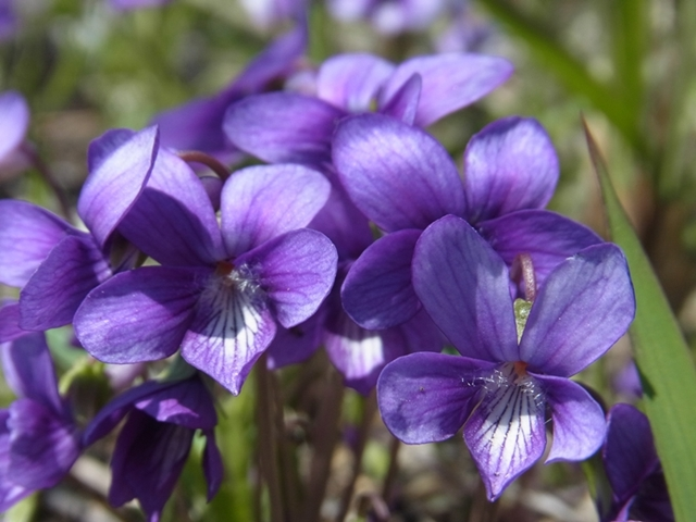 秋吉台の花20150411008
