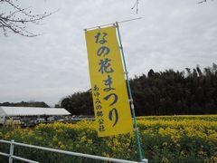 菜の花祭り!