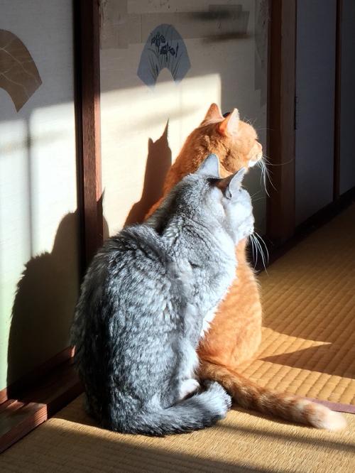 booako_20150327.jpg