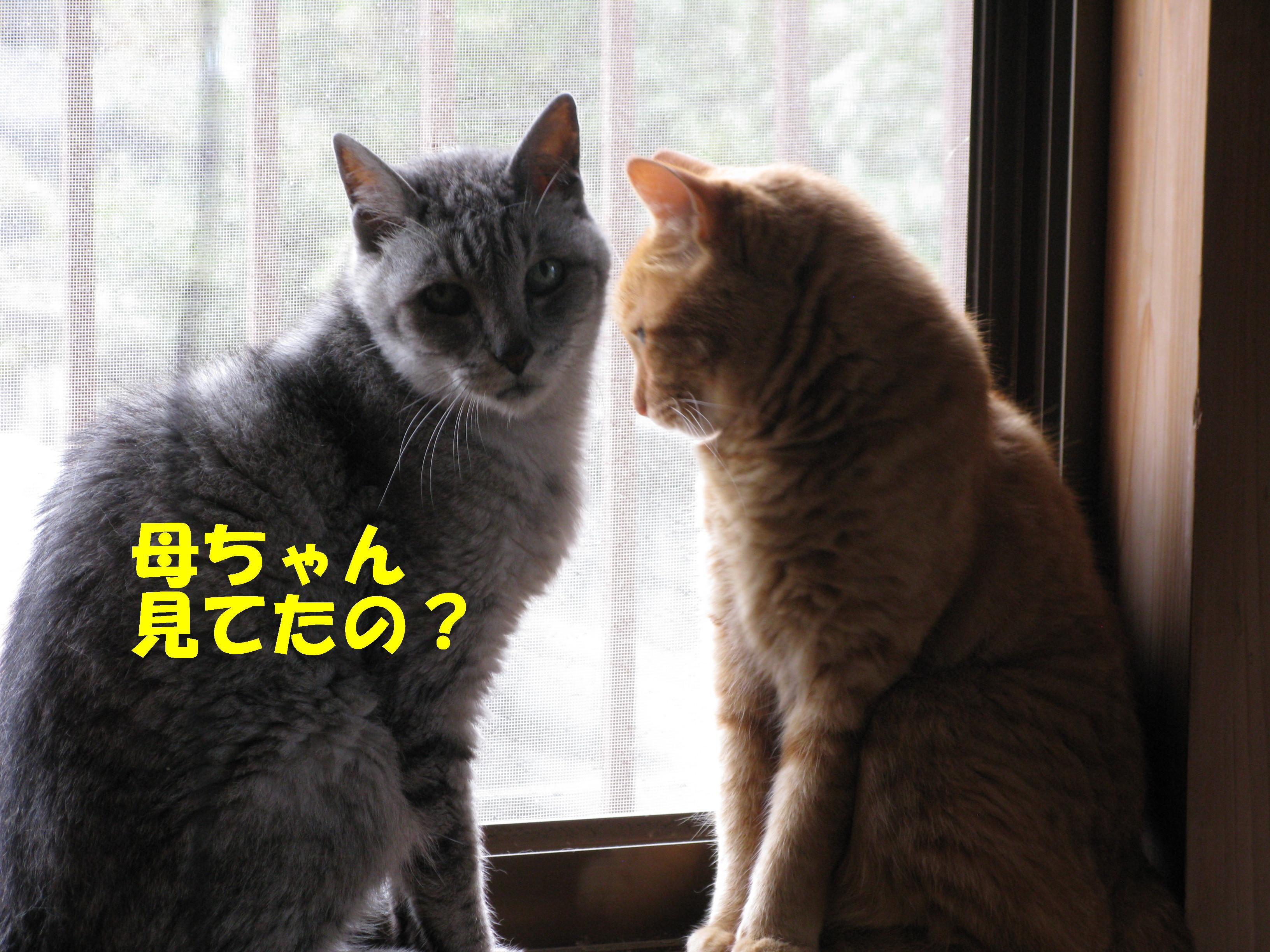 booako_201507110731.jpg