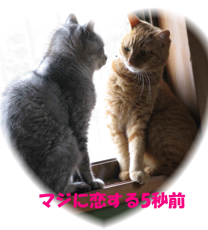 booako_201507110732.jpg