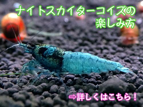 night_t.jpg