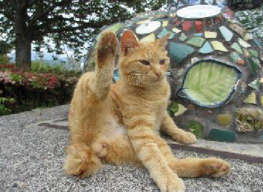 松山総合公園のアイドル猫だったチャチャも、2012年6月のある日から、突然姿がみえなくなりました。