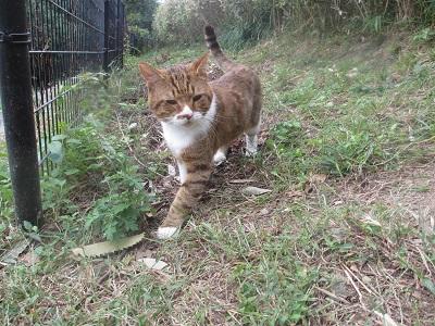松山総合公園の猫2