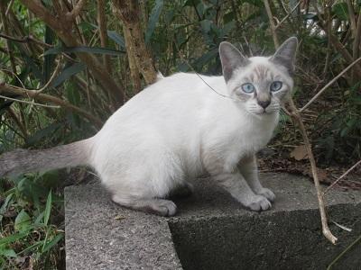 松山総合公園の猫4