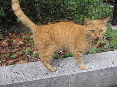 松山総合公園の猫 (9)