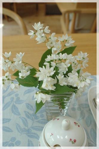 姫ウツギの花