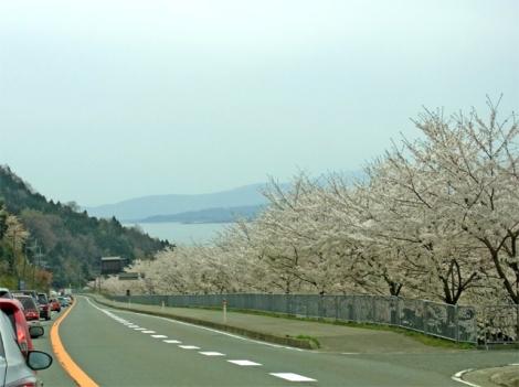 湖北の桜01