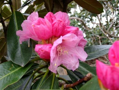 07-2石楠花