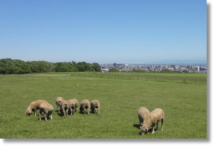 羊ヶ丘展望台DSC06136