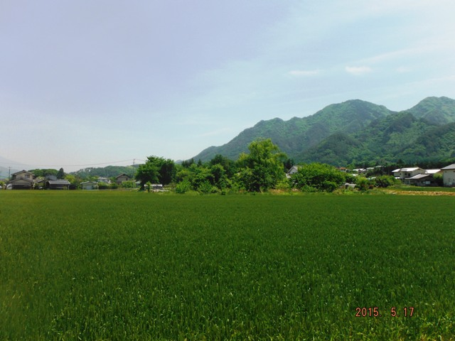 手塚館(大城) (17)