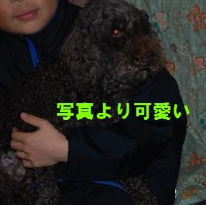 DSC_0810_201504112249529d5.jpg