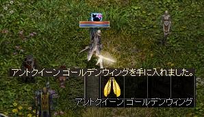 LinC0156金羽GET