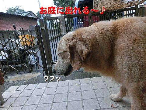 b_2015070300564785b.jpg