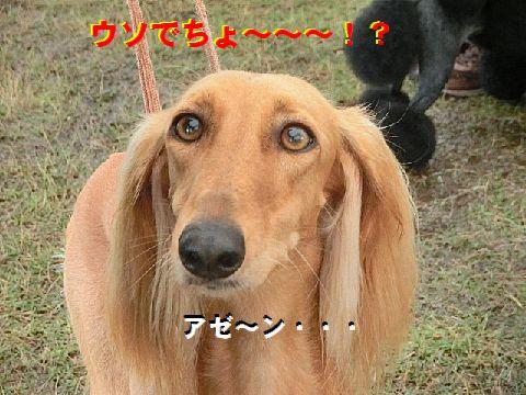 d_2015070408281769f.jpg
