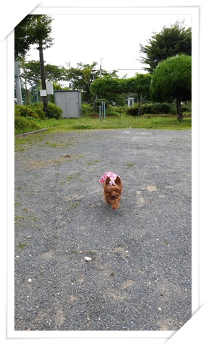 6月30日散歩IMG00021-20150630