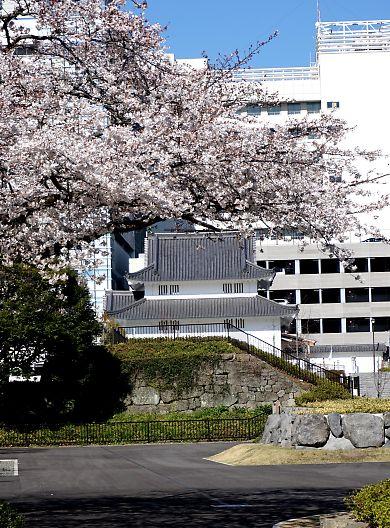 市内桜開花情報2-6