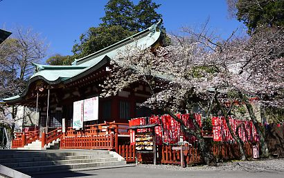 市内桜開花情報2-7