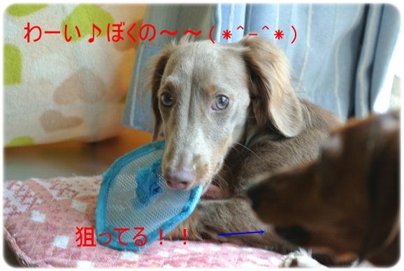 DSC_1257_20150714101429b8e.jpg