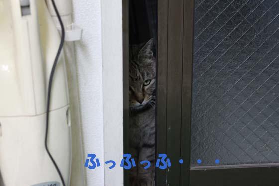 kyunnym4.jpg