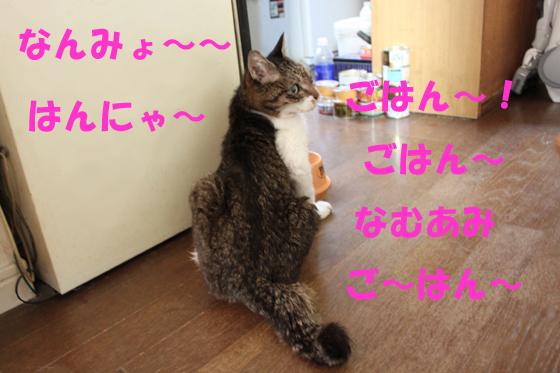 obsminr5.jpg