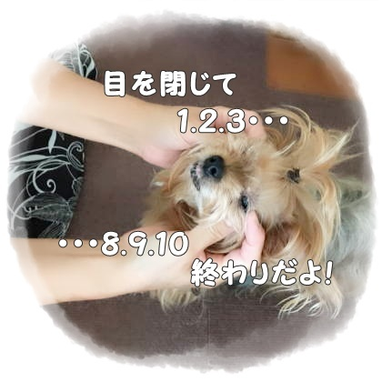 IMG_8793.jpg