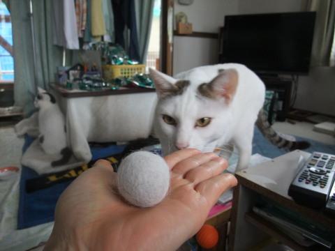 ポッチの毛玉ボール