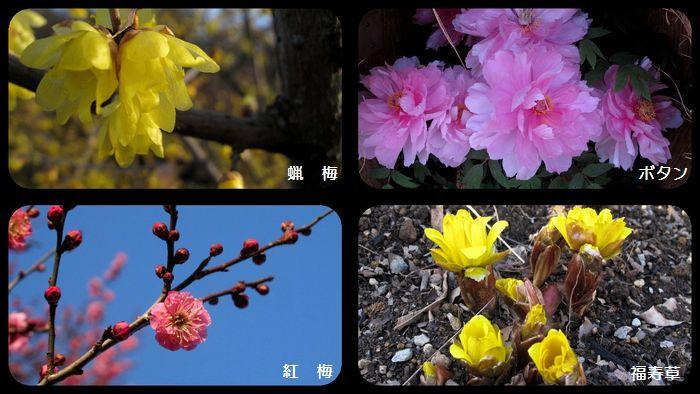 花 コラージユ