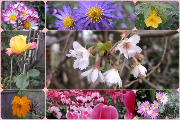多摩川の花