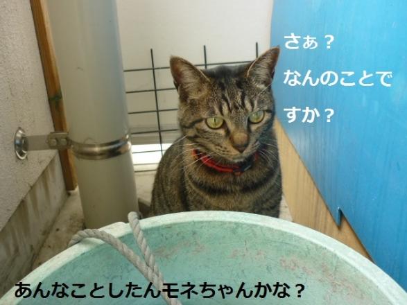 1しらばっくれる猫