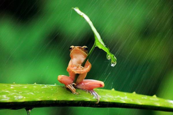 Fascinating Pictures @Fascinatingpics