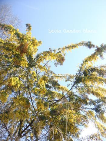 mimoza_convert_20150326153306.jpg