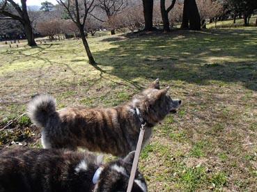 別府公園散歩