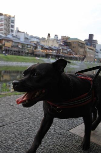 201506_1泊2日京都旅行14