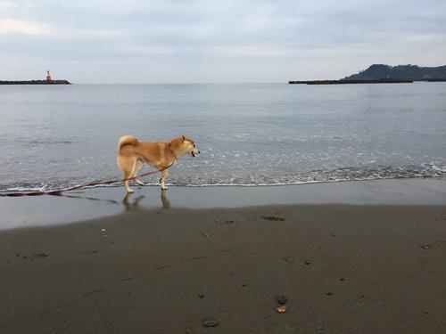 海で遊ぶ3