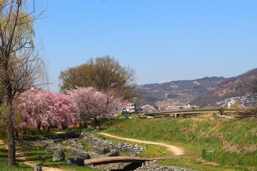 クウチャンとお花見散歩9