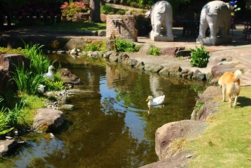 ハーブ庭園旅日記24